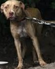 abused dog (2)