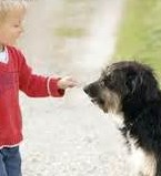 dog and kid playing (2)