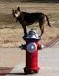 dog on hydrant (2)