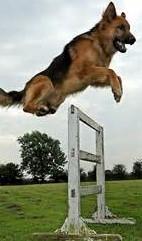 dog jumping (2)