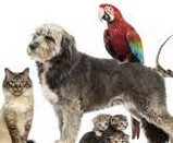 dog with birds (2)