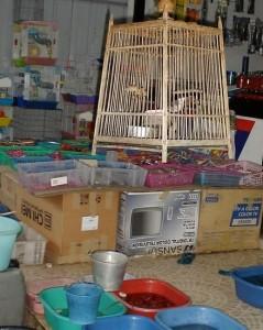 pet shop (2)