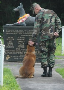 memorial-day-dog